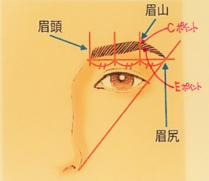 眉のカタチの起点となる3つのポイント