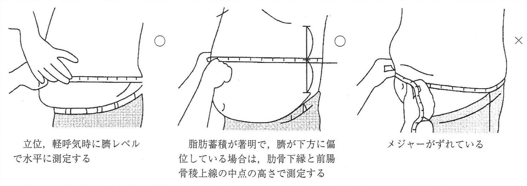 腹囲の測定方法