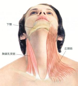 広頸筋や胸鎖乳突筋